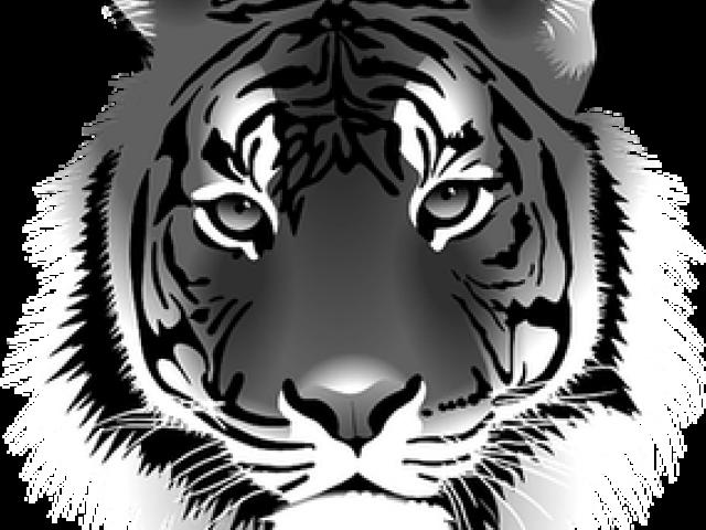 Tiger / Tigexp