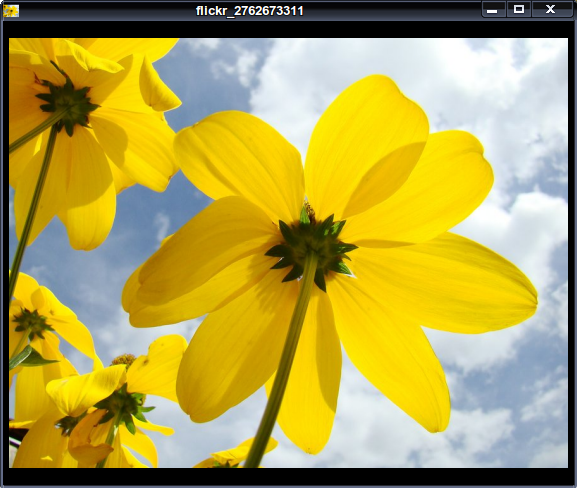 Reflect Image Viewer