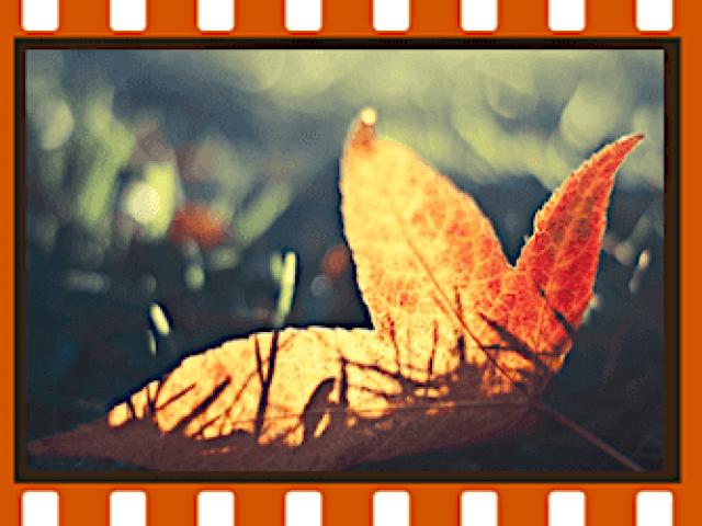 Filmulator