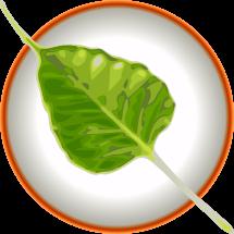 Bodhi Linux - дистрибутив Линукса на баде Ubuntu и Enlightenment